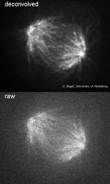 Spindle before and after deconvolution