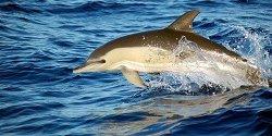 Delfin im Wasser von Annette Scheffer Klein