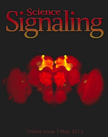 Science Signaling Cover 5-2013