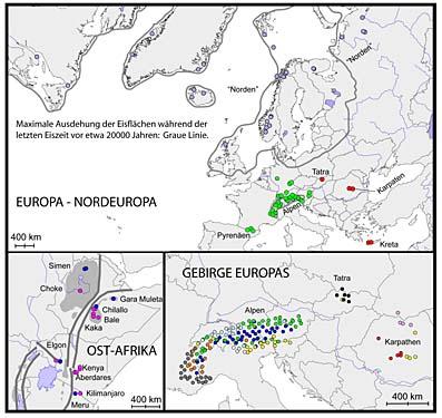 Die Grafik zeigt die genetische Zugehörigkeit von Populationen der Alpengänsekresse in unterschiedlichen Gebirgsregionen und anderen Großräumen. Die Daten dafür stammen aus der Analyse der im Kern enthaltenen Erbsubstanz.